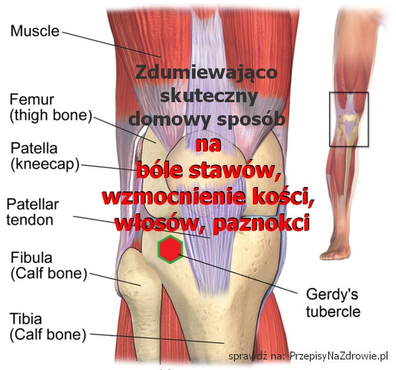 PrzepisyNaZdrowie.pl-zdumiewajacy-sposob--mikstura-na-bole-stawow-wzmocnienie-kosci-wlosow-paznokci
